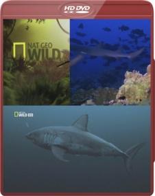 Самые опасные акулы / NG. World's Deadliest Sharks (2011) HDTV